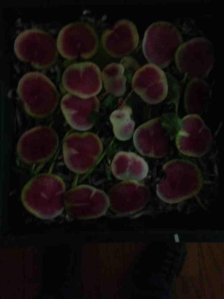 Local, farm-raised, seasonal, organic veggies delivered to my door...-imageuploadedbytapatalk1386721076-712504-jpg