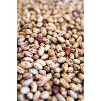 Turkey pinto beans-pinto-beans-jpg