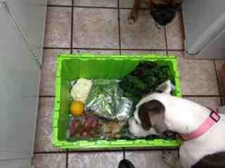 Local, farm-raised, seasonal, organic veggies delivered to my door...-imageuploadedbytapatalk1365547849-414292-jpg