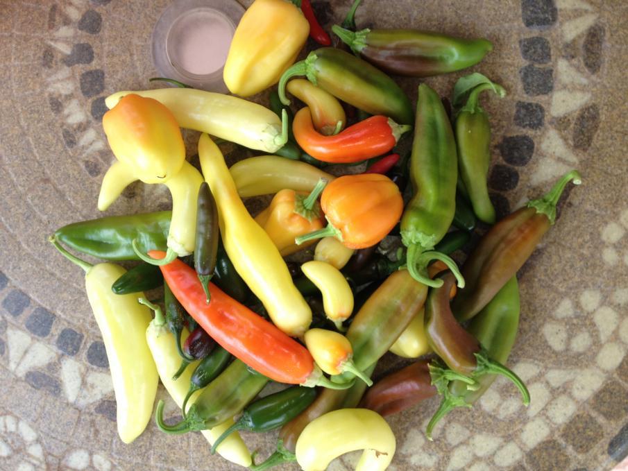 Got Too Many Peppers?  Make Homemade Hot Sauce!-img_0209-jpg